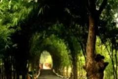 Lemon Tree Resort- Bandhavgarh